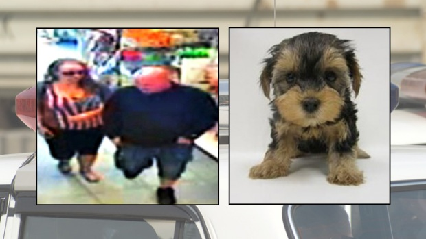 [DC]  Police: Duo Buys Dog With Parishioner's Stolen Credit Card