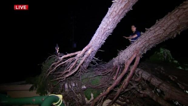 [LA] Winds Knock Down Massive Tree