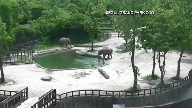 [DFW-NATL] Watch: Mother, Aunt Elephants Save Baby From Drowning