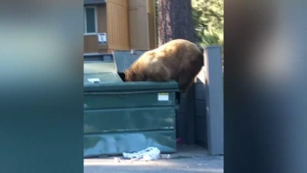 [NATL-DFW] Bear Dumpster Dives, Then Picnics