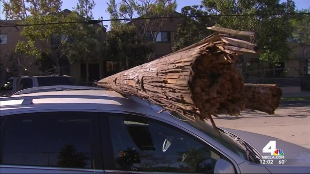 [LA] Tree, Utility Pole Land on SUV