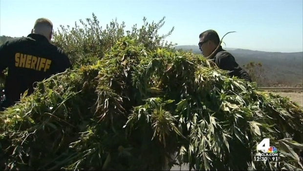 [LA] $5 Million Worth of Marijuana Found in OC Park