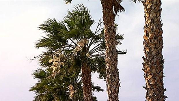 [LA] High Winds Wreak Havoc in SoCal