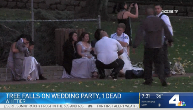 [LA - STRINGER] Police Guard Park After Tree Falls on Wedding Party, Killing 1