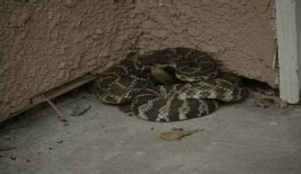 [BAY] Snake Scam in the East Bay: Thieves Post as City Workers