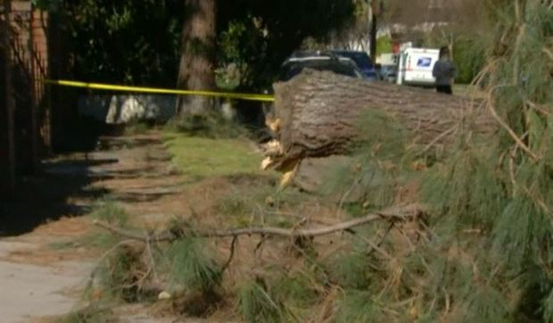 [LA] Woman Pinned Under Downed Tree