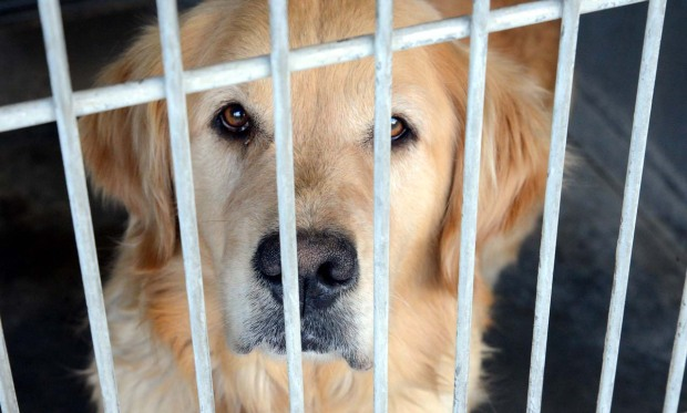 Quot Happy Day Quot For Nearly 200 Dogs Rescued At Abandoned Desert Home Nbc Southern California