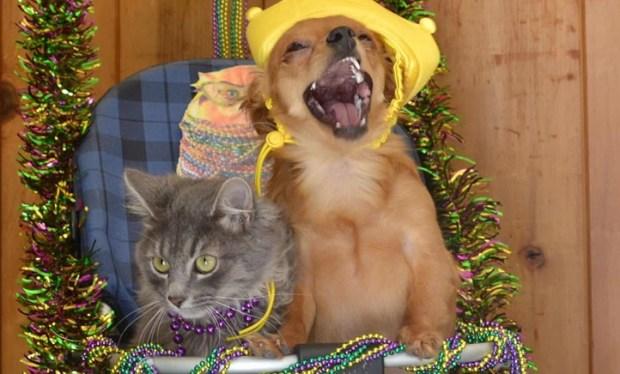 [PHOTOS]Dog Mom and Kitten Son Lead Doggie Gras