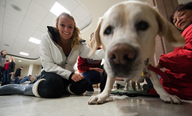 Therapy Dogs Help Occidental College Students De-Stress During Finals