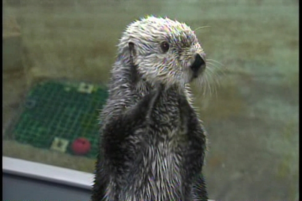 BP Otter Habitat to Open in Long Beach
