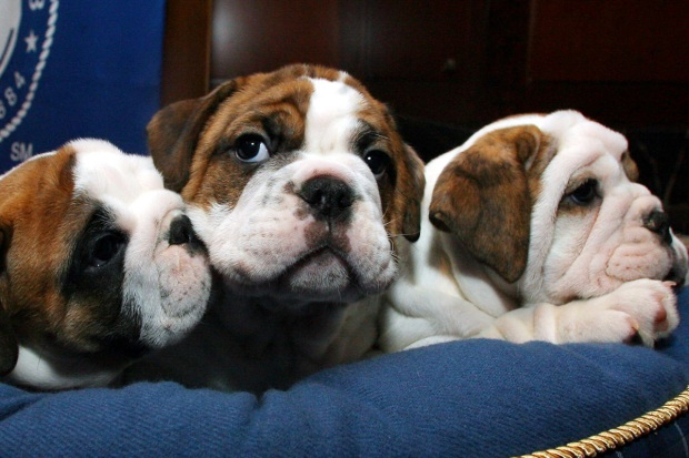 Most Common Dog Breeds In Puppy Mills