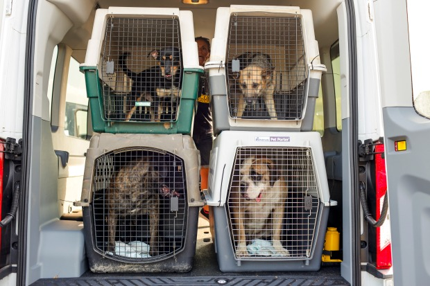 [NATL-DC] 120 Dogs, Cats in Path of Tropical Storm Barry Arrive in Virginia