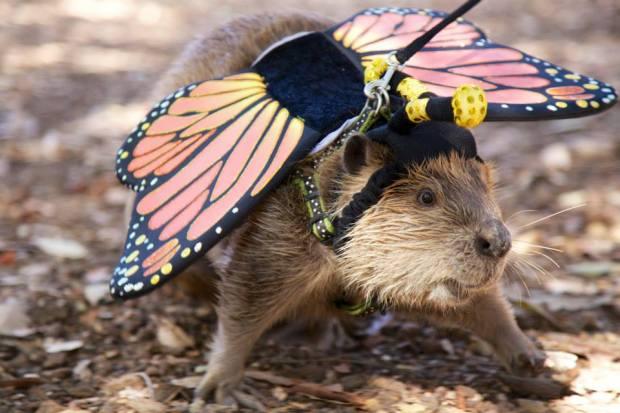 Pumpkin-Lovin' Critters: OC Zoo Halloween