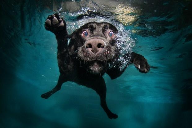 Underwater Dog Photos Make a Splash