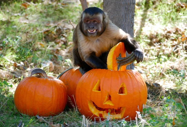 Wildlife Waystation Halloween