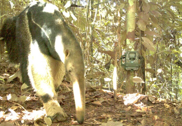Amazon Animals Gone Wild on Candid Camera
