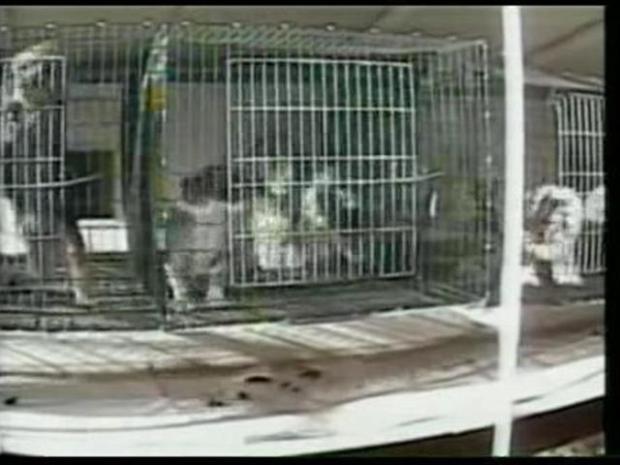 [LA] West Hollywood Takes Step Toward Banning Pet Sales