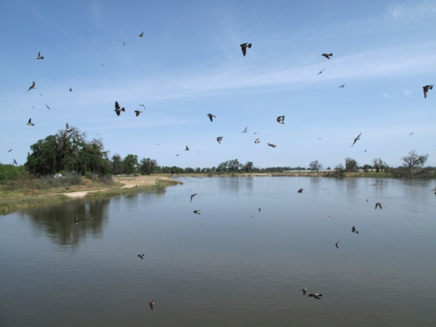 [LA GALLERY] Photos: For San Joaquin Valley Residents, Effect of Drought Continues
