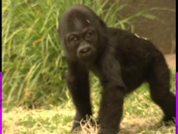 [BAY] Baby Hasani Makes Public Debut