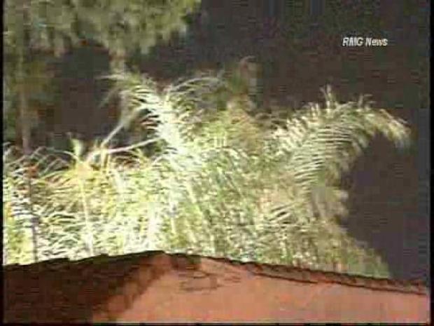 [LA] Wind Hits LA County