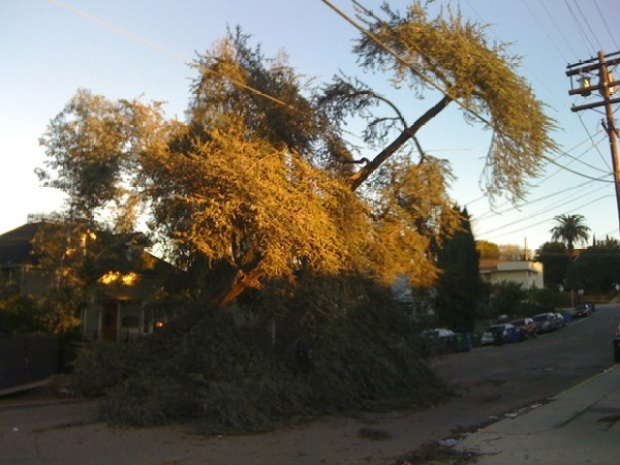 Storm Images: Trees Down