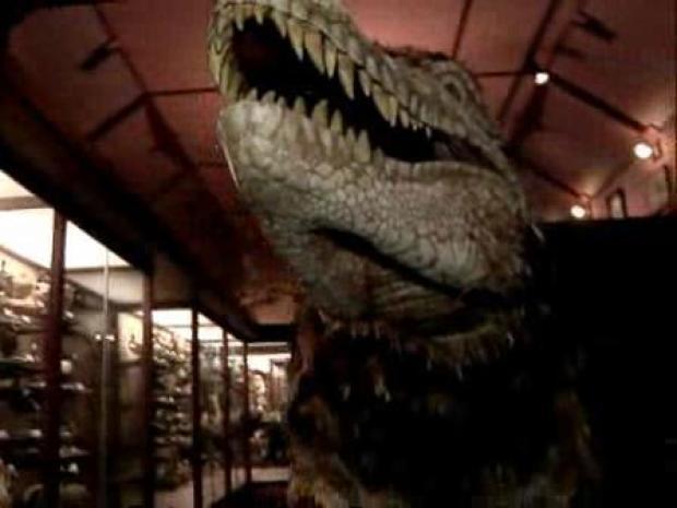 [LA] T-Rex Roams Museum Hallways