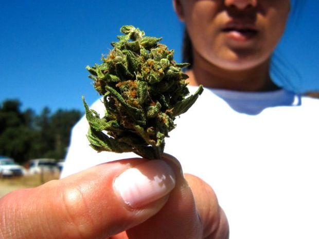 Meet the MET: Marijuana Eradication Team