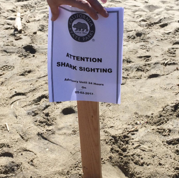 Shark Attacks Swimmer at Popular Surf Spot off San Onofre State Beach