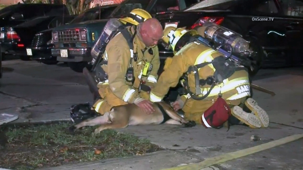 [LA] Firefighters Rescue Dog From Fire, Provide Water and Oxygen