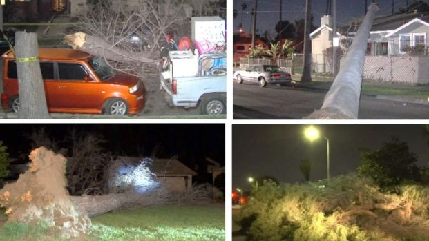 [la gallery] Photos: Overnight Winds Knock Down Trees Across LA