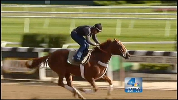 "[LA] ""Handsome Mike"" Represents LA in Breeder's Cup"