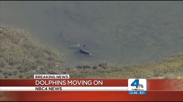 [LA] Dolphins Visit Bolsa Chica Wetlands