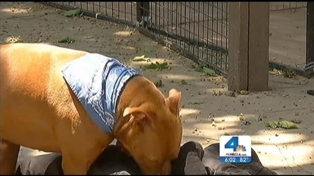 [LA] Cities Consider New Laws Restricting Pit Bulls After Latest Attack