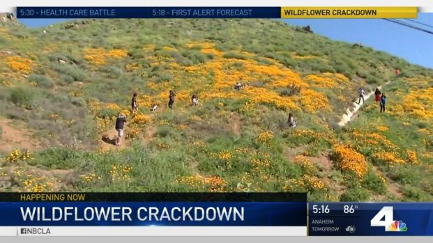 [LA] Hundreds Slowing Traffic for Glimpse at Wildflowers