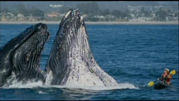 [LA] Whale of a Tale