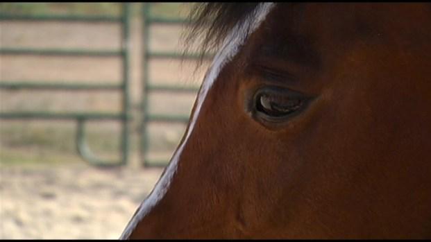 [LA] Meet the Horses
