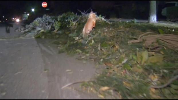 [LA] Crews Work to Clean Up Wind Storm Debris