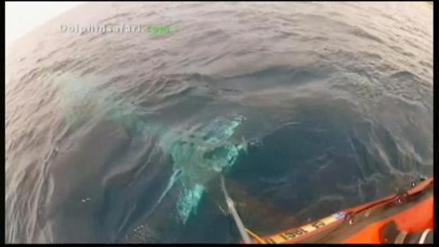 [LA] Whale Rescued From 50 Feet of Net Off OC Coast