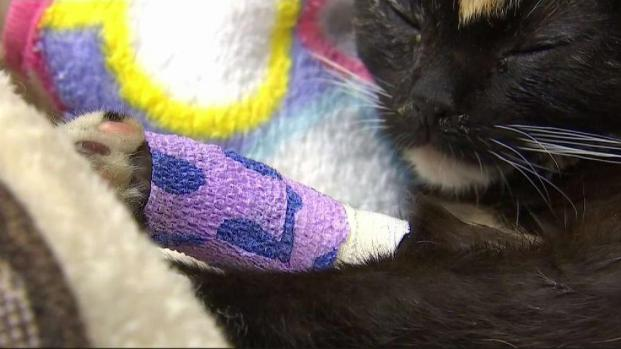 Animal Cruelty Arrest in Fontana