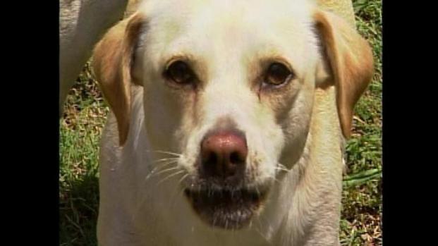 [LA] LA Sets Standards for Barking Dog Violations