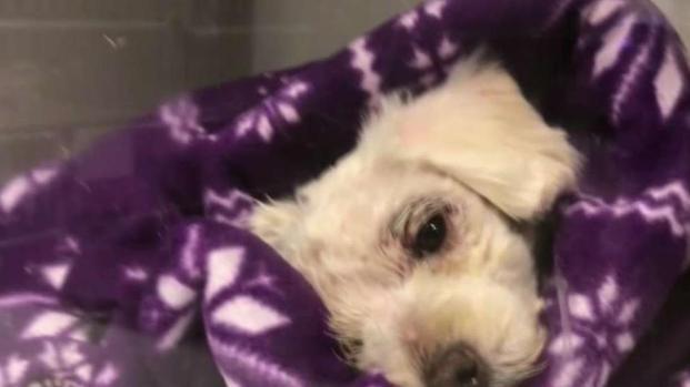 [LA] Dog Found In Dumpster in Long Beach