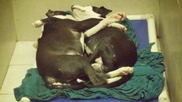 [PHI] Blind Pup, Brother Awaiting Adoption