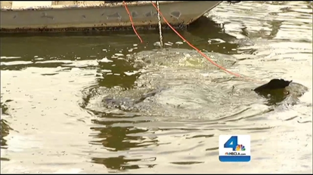 [LA] Officer Dives Into La Brea Tar Pits in Search of Weapons