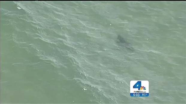 [LA] Lifeguards Advise Caution to Beachgoers After Shark Sighting Near Manhattan Beach
