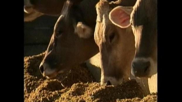 [LA] USDA: CA Mad-Cow Case Poses No Risk to Food Supply