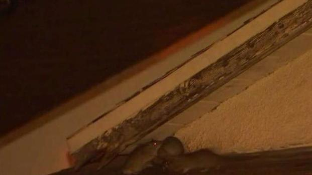 Health Inspector Responds to Reported Rat Infestation on