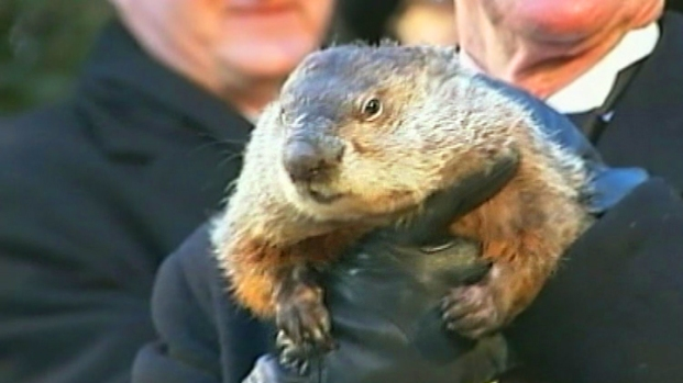 [NEWSC] Defending Punxsutawney Phil