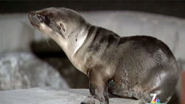 [DGO] Increase Number of Sea Lion Pup Rescues