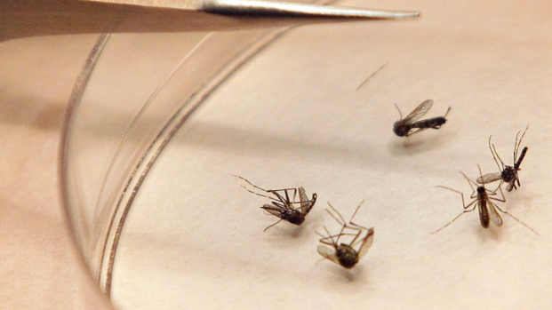 [LA] How to Protect Against West Nile Virus