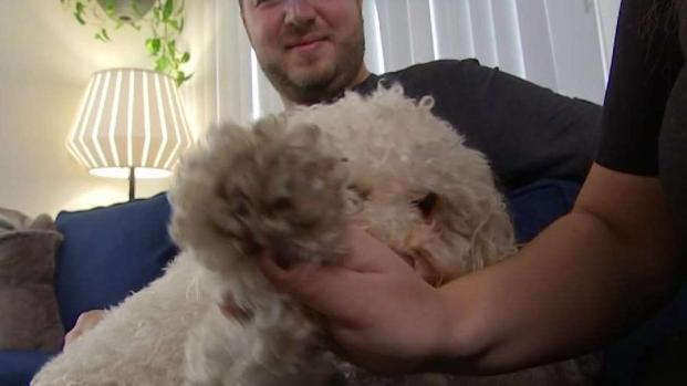 Woman Says Dog-Sitter From App Lost Her Fur Baby